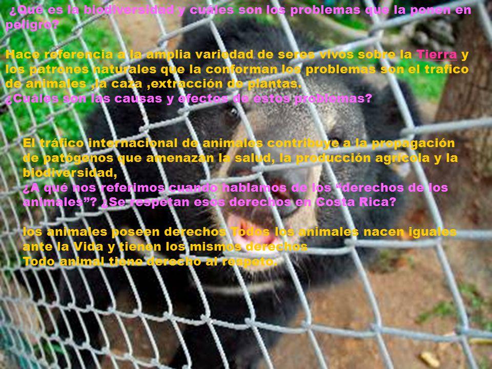1-¿Se presentan problemas que ponen en peligro la biodiversidad o los derechos de los animales en su comunidad.