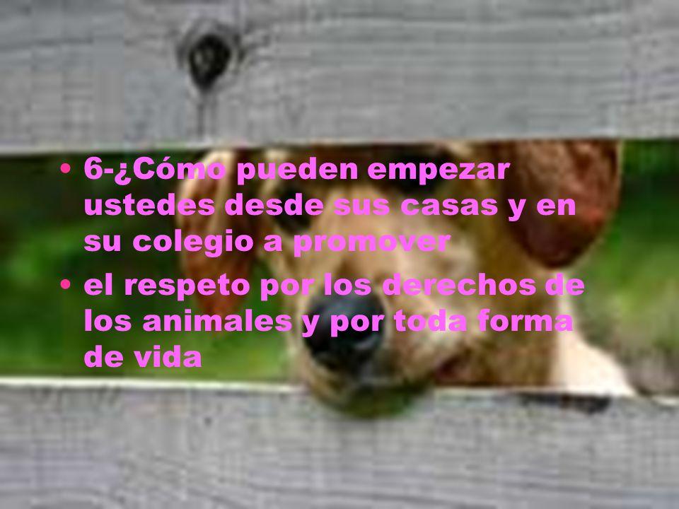 6-¿Cómo pueden empezar ustedes desde sus casas y en su colegio a promover el respeto por los derechos de los animales y por toda forma de vida