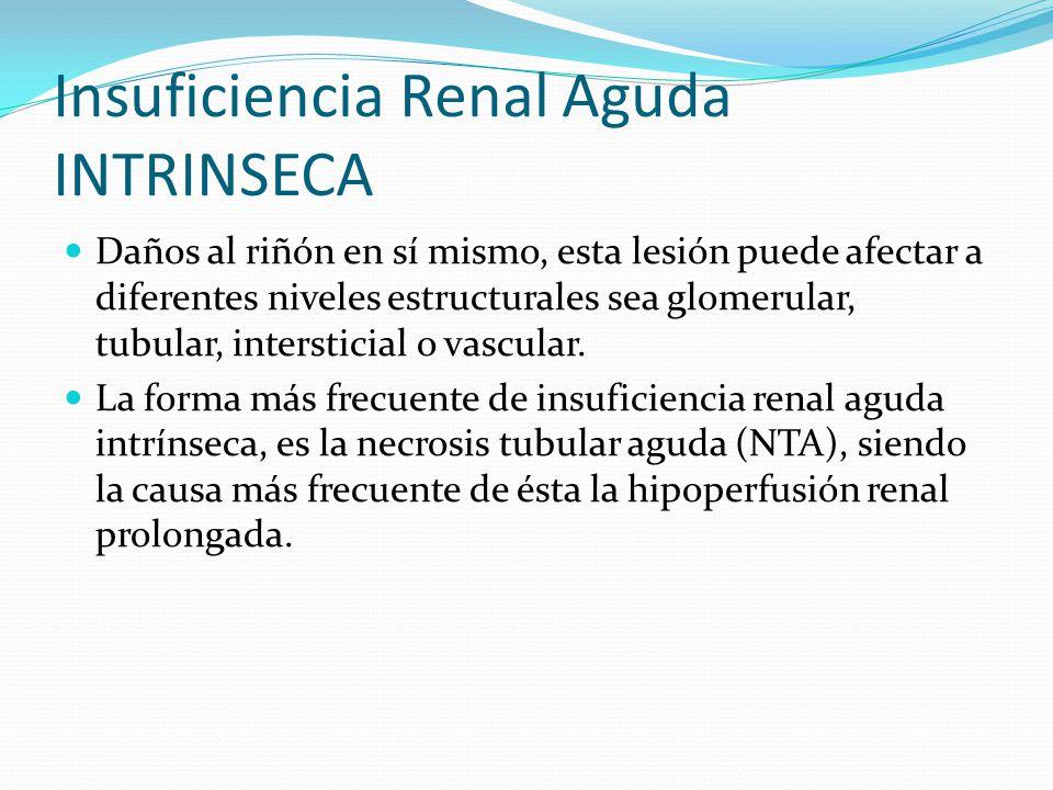 Insuficiencia Renal Aguda INTRINSECA Daños al riñón en sí mismo, esta lesión puede afectar a diferentes niveles estructurales sea glomerular, tubular,