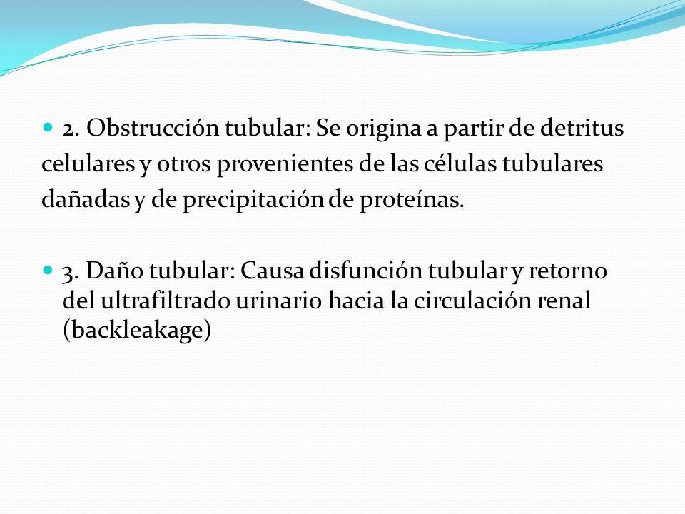 2. Obstrucción tubular: Se origina a partir de detritus celulares y otros provenientes de las células tubulares dañadas y de precipitación de proteína