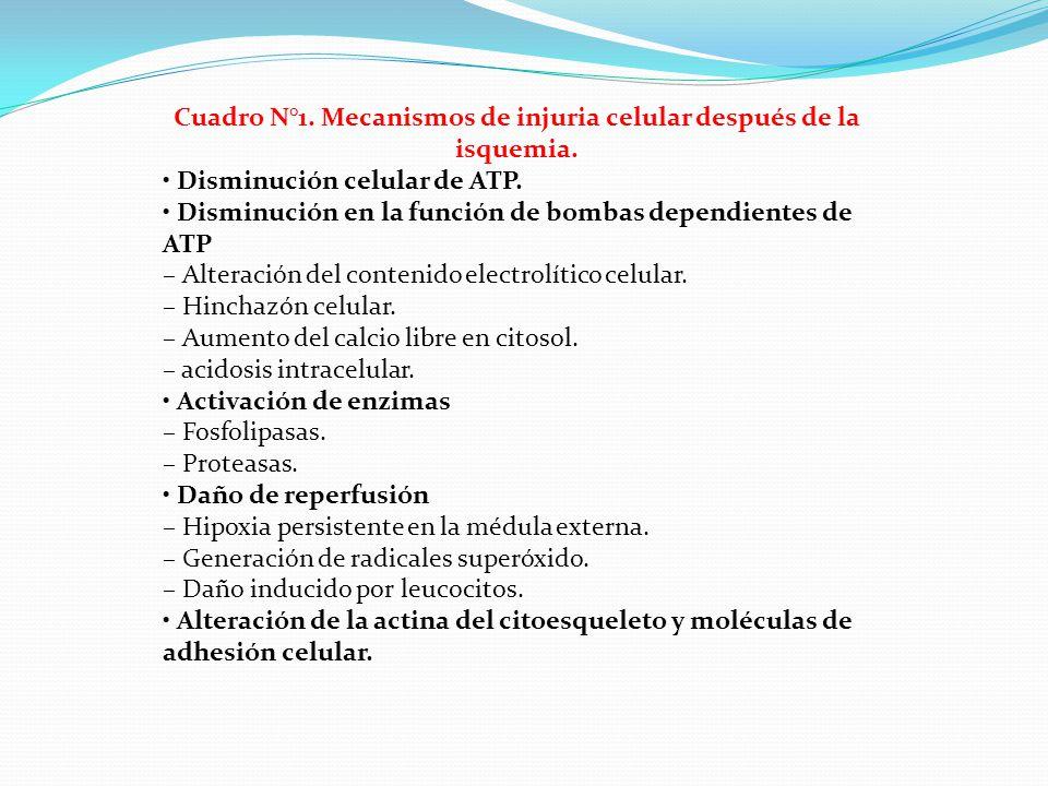 Cuadro N°1. Mecanismos de injuria celular después de la isquemia. Disminución celular de ATP. Disminución en la función de bombas dependientes de ATP