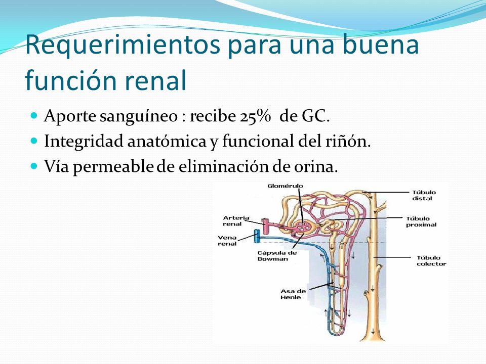 Insuficiencia Renal Síndrome clínico secundario a la caída de la tasa de filtración glomerular.