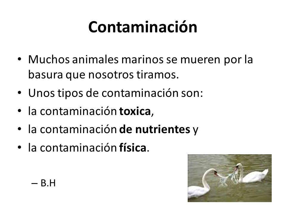 Contaminación Muchos animales marinos se mueren por la basura que nosotros tiramos.