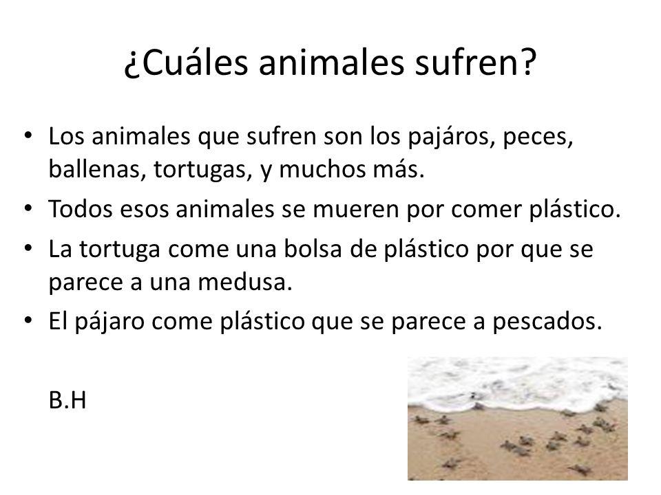 ¿Cuáles animales sufren? Los animales que sufren son los pajáros, peces, ballenas, tortugas, y muchos más. Todos esos animales se mueren por comer plá