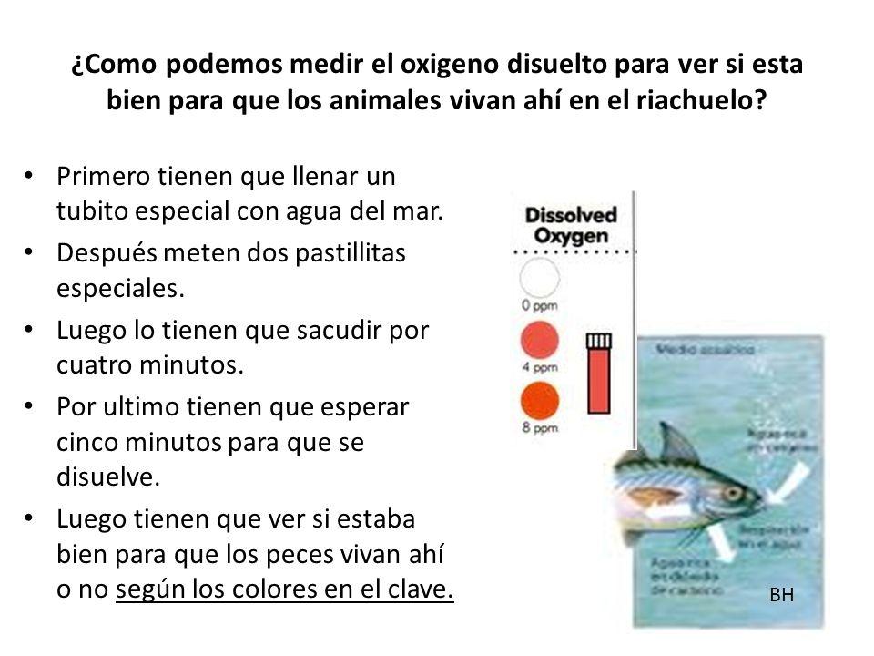 ¿Como podemos medir el oxigeno disuelto para ver si esta bien para que los animales vivan ahí en el riachuelo.