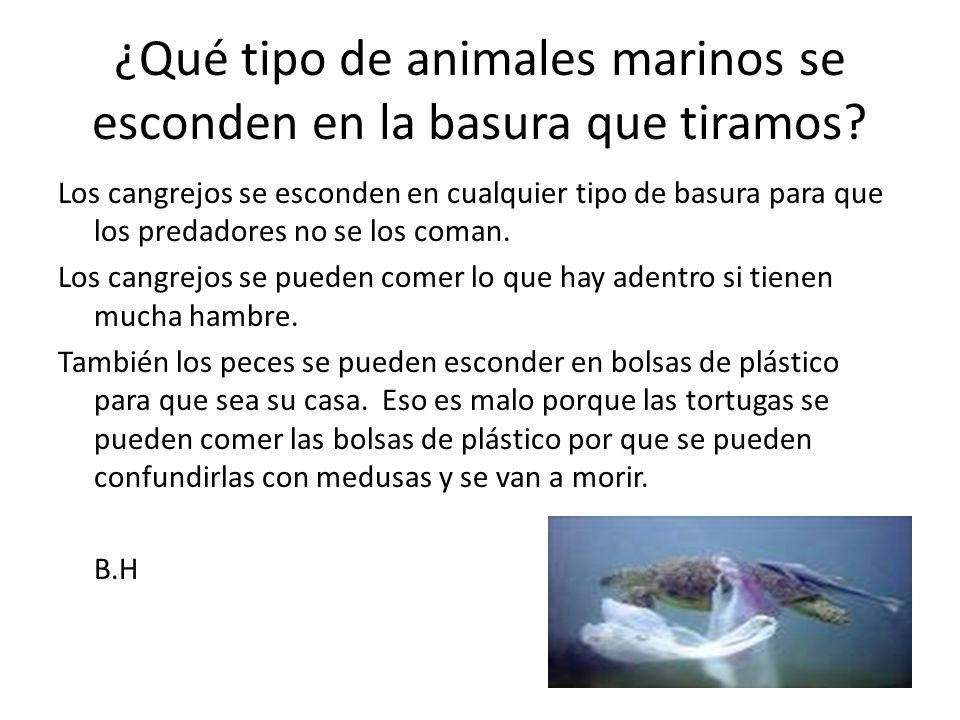 ¿Qué tipo de animales marinos se esconden en la basura que tiramos.