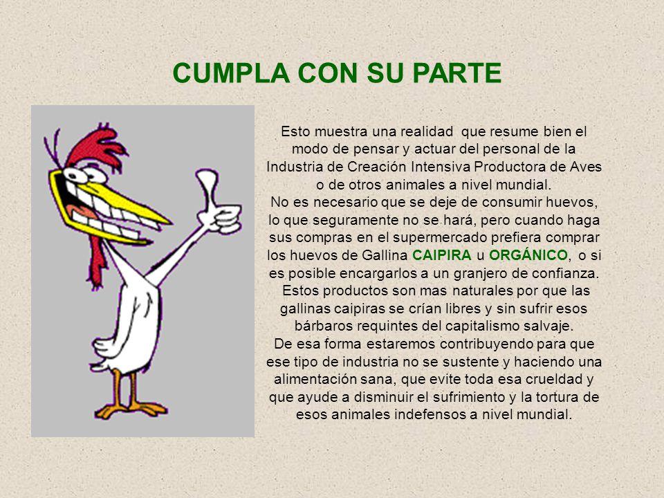 Las aves, también se ven afectadas por los problemas de sus dueños o criadores. Algunos granjeros que quiebran abandonan las gallinas ponedoras, deján