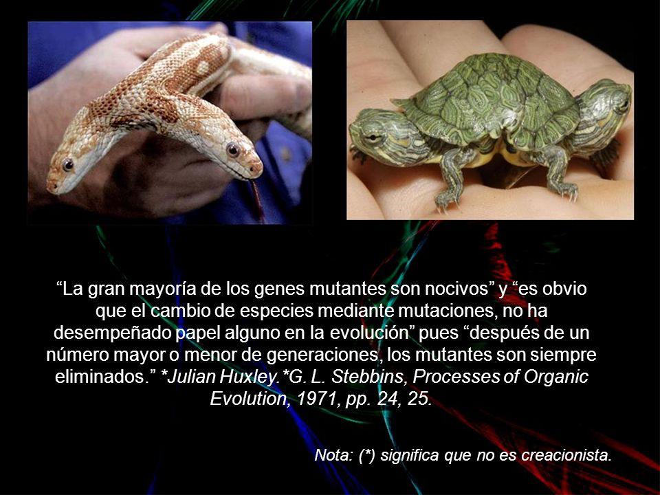 La mayoría de las mutaciones, tanto aquellas que surgen en los laboratorios, como aquellas almacenadas en las poblaciones naturales, siempre deteriora