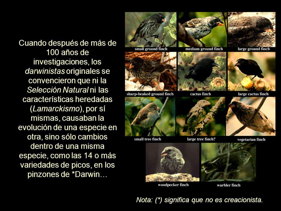 Cuando después de más de 100 años de investigaciones, los darwinistas originales se convencieron que ni la Selección Natural ni las características heredadas (Lamarckismo), por sí mismas, causaban la evolución de una especie en otra, sino sólo cambios dentro de una misma especie, como las 14 o más variedades de picos, en los pinzones de *Darwin… Cuando después de más de 100 años de investigaciones, los darwinistas originales se convencieron que ni la Selección Natural ni las características heredadas (Lamarckismo), por sí mismas, causaban la evolución de una especie en otra, sino sólo cambios dentro de una misma especie, como las 14 o más variedades de picos, en los pinzones de *Darwin… Nota: (*) significa que no es creacionista.