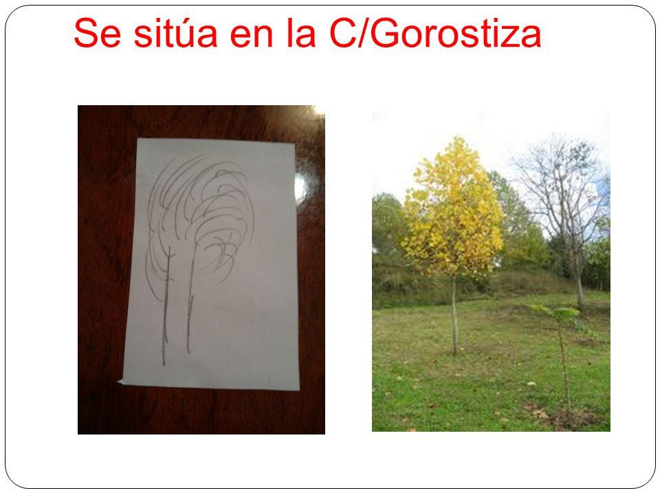 Se sitúa en la C/Gorostiza