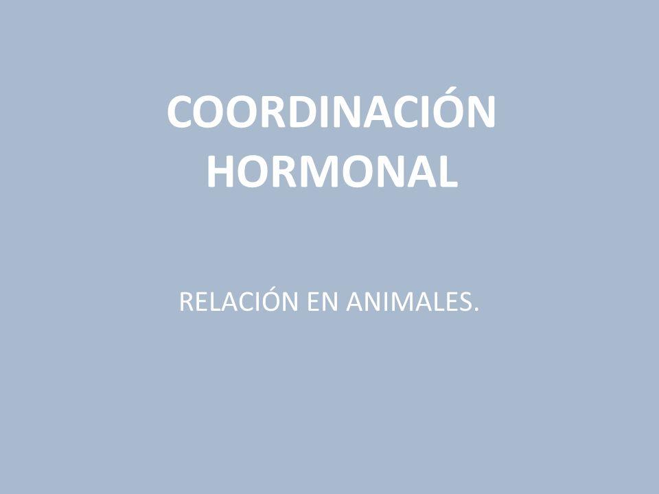 COORDINACIÓN HORMONAL RELACIÓN EN ANIMALES.