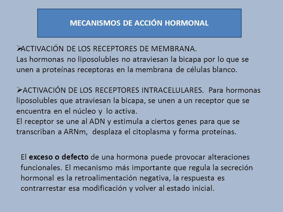 MECANISMOS DE ACCIÓN HORMONAL ACTIVACIÓN DE LOS RECEPTORES DE MEMBRANA. Las hormonas no liposolubles no atraviesan la bicapa por lo que se unen a prot