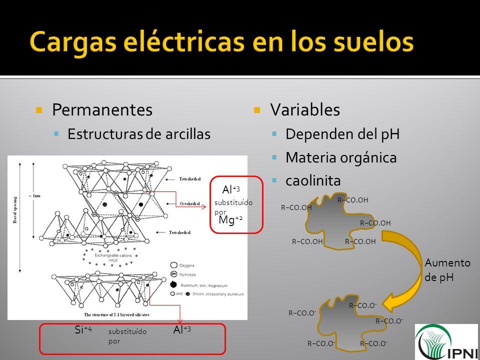Permanentes Estructuras de arcillas Variables Dependen del pH Materia orgánica caolinita Al +3 Si +4 substituído por Mg +2 Al +3 RCO.OH RCO.O - Aument