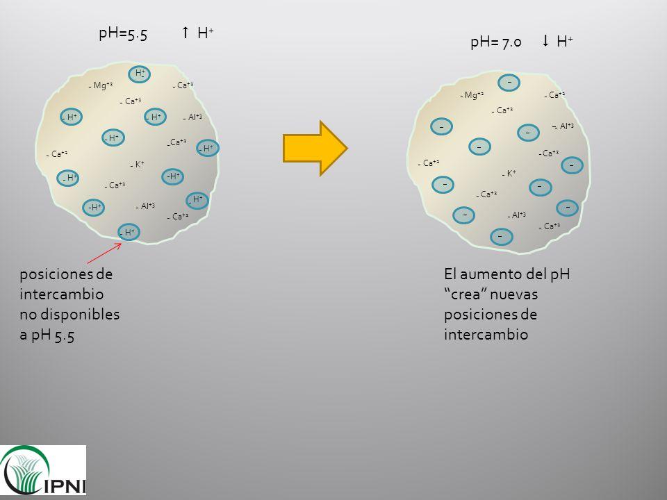 pH=5.5 H+H+ H+H+ H+H+ H+H+ H+H+ H+H+ H+H+ H+H+ H+H+ H+H+ Ca +2 Mg +2 K+K+ Al +3 - - - - - - - - - - - - - - - - - - - - posiciones de intercambio no d