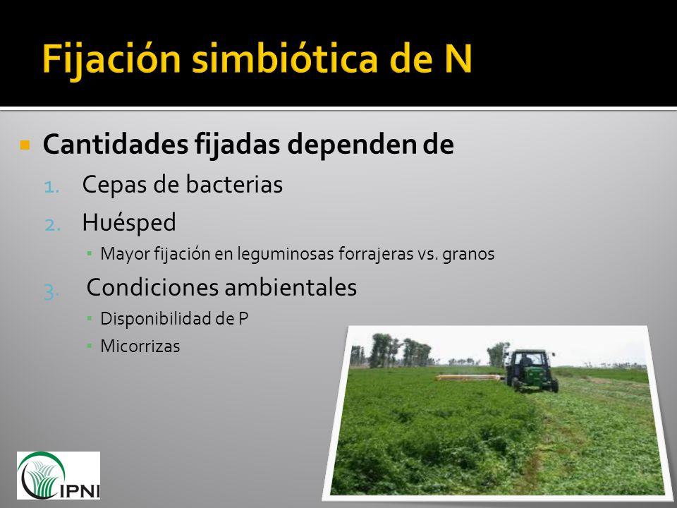 Cantidades fijadas dependen de 1. Cepas de bacterias 2. Huésped Mayor fijación en leguminosas forrajeras vs. granos 3. Condiciones ambientales Disponi