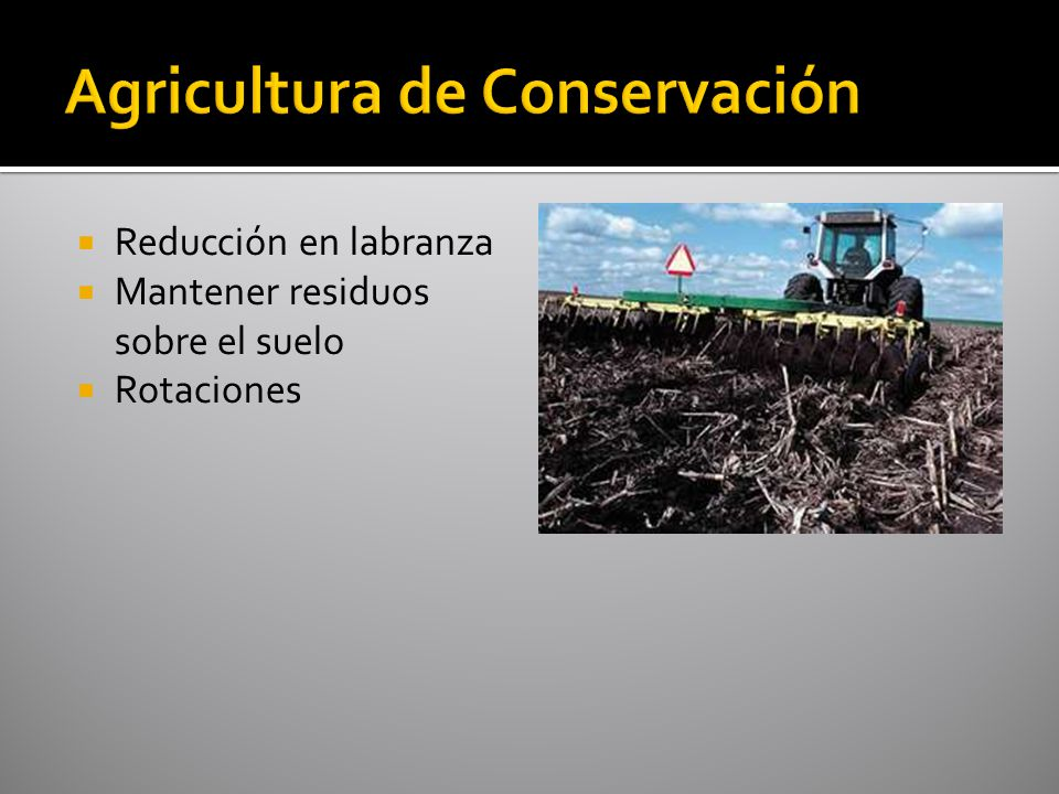 Más eficientes con: bajos niveles de nutrimentos en el suelo bajas dosis de aplicación nutrimentos que se mueven principalmente por difusión maíz