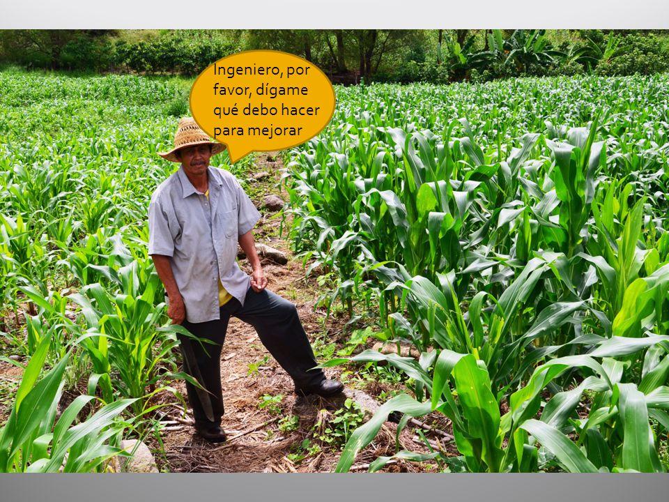 volumen de suelo en una ha a 20 cm (m 3 ) densidad aparente (g/cm 3 ) peso de suelo en una ha a 20 cm (ton) P disponible según Bray P1 (ppm) P suministrado por el suelo (kg/ha) P 2 O 5 suministrado por el suelo (kg/ha) Demanda de P 2 O 5 para 12 t/ha de maíz (kg/ha) Cantidad de P 2 O 5 a aplicar (kg/ha) 20001.22400153682128(128-82)/efic ¿Es este valor mayor o menor que el nivel crítico para maíz en ese suelo.