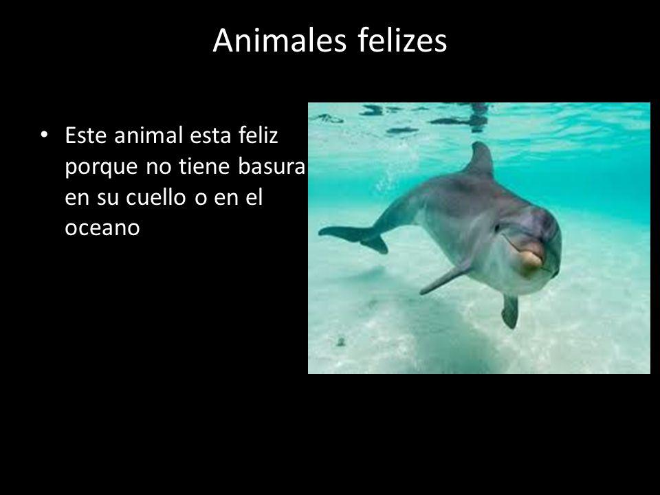 Animales en peligro Los animales que estan en peligro son las focas, delfines, las totugas marinas, cangrejos ect