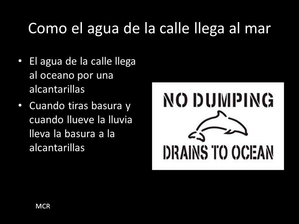 Que mas podemos hacer para cuidar nuestro ambiente? Podemos limpiar la playa que los animales no se enfermen o mueren o se atrapen con la basura.