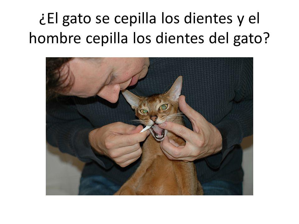 ¿El gato se cepilla los dientes y el hombre cepilla los dientes del gato?