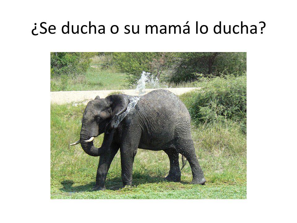 ¿Se ducha o su mamá lo ducha?