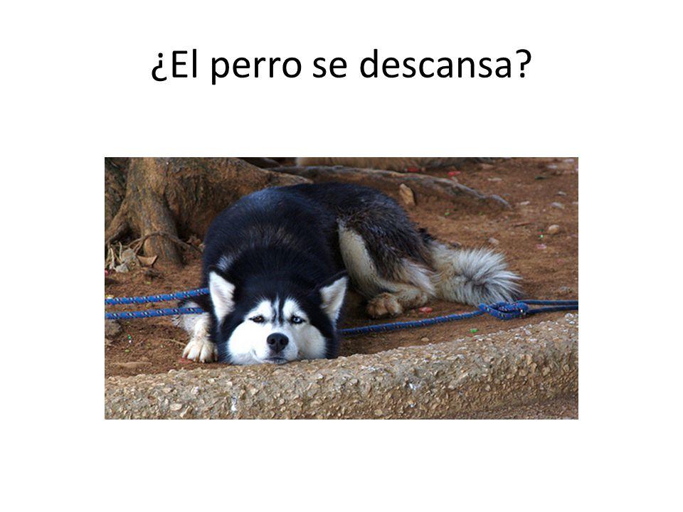 ¿El perro se descansa?