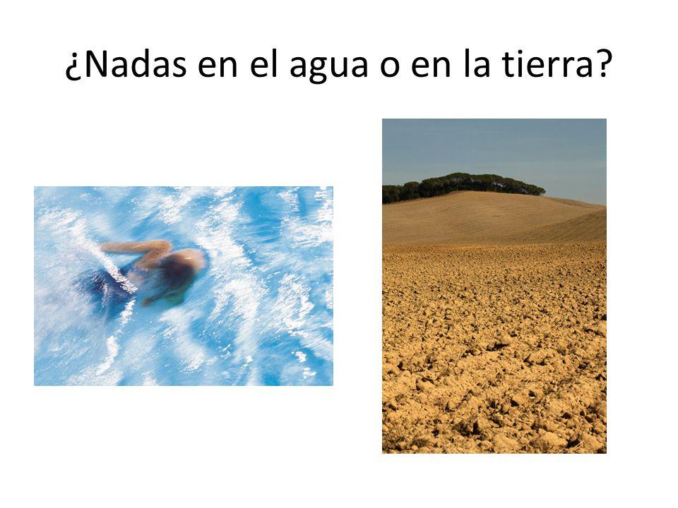 ¿Nadas en el agua o en la tierra?