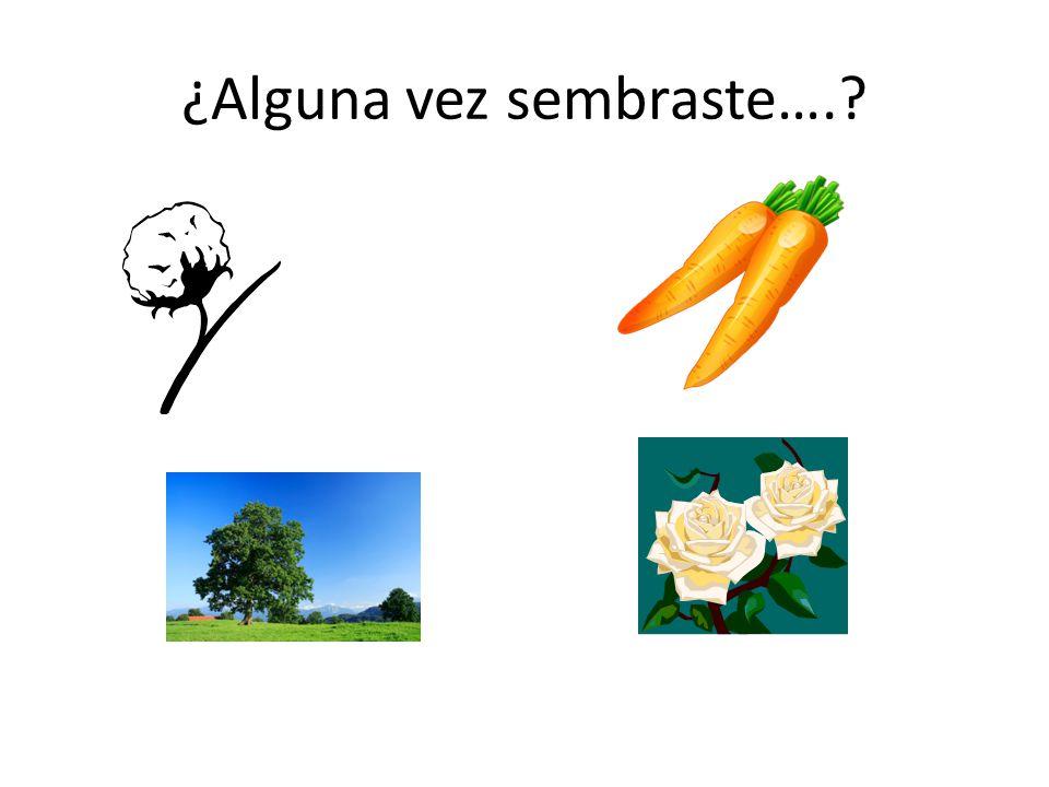 ¿Quién riega las plantas en….?