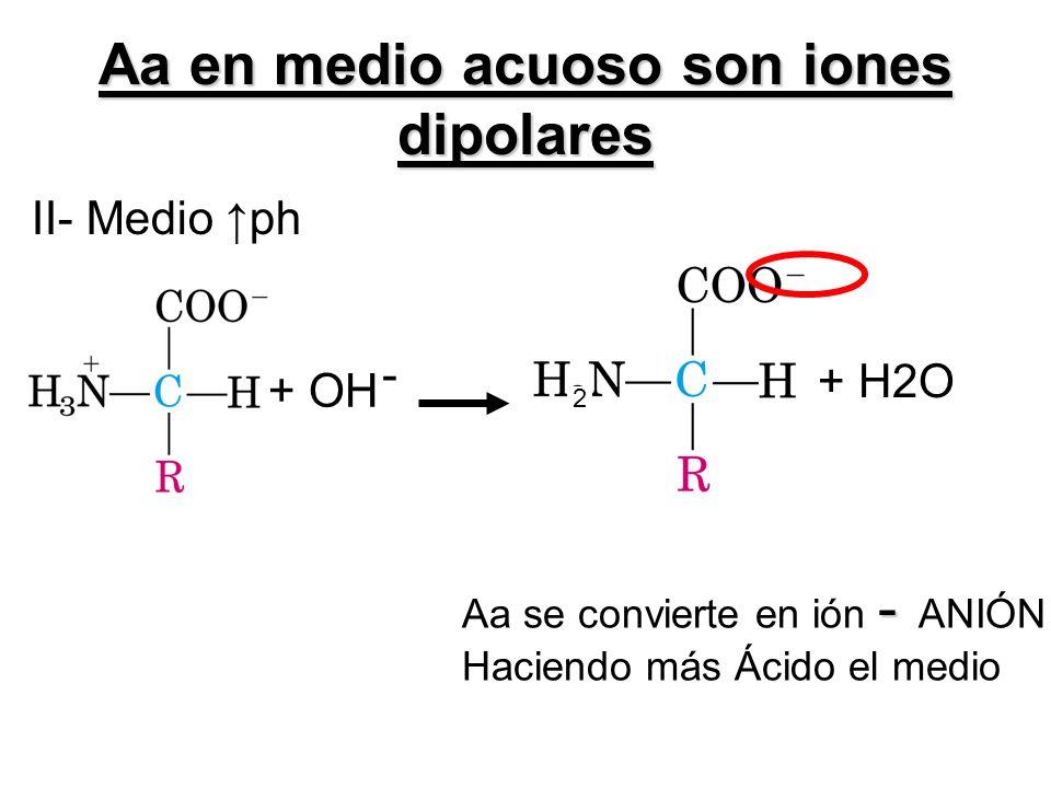 II- Medio ph Aa en medio acuoso son iones dipolares + OH - 2 + H2O - Aa se convierte en ión - ANIÓN Haciendo más Ácido el medio