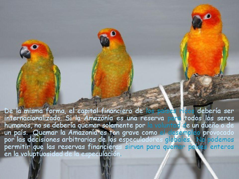 También, antes que la Amazonía, me gustaría ver la internacionalización de los grandes museos del mundo.