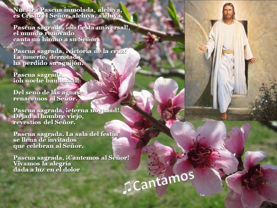 Nuestra Pascua inmolada, aleluya, es Cristo el Señor, aleluya, aleluya.