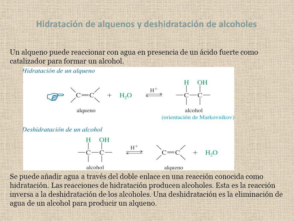 Hidratación de alquenos y deshidratación de alcoholes Un alqueno puede reaccionar con agua en presencia de un ácido fuerte como catalizador para forma