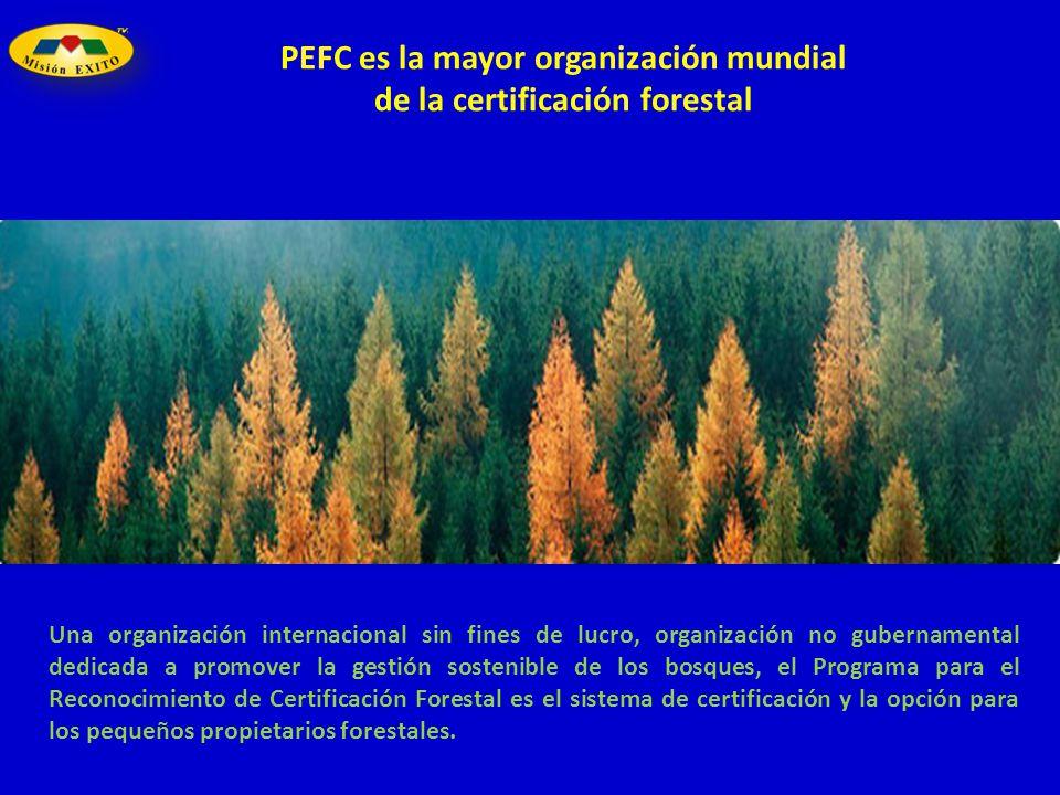 Una organización internacional sin fines de lucro, organización no gubernamental dedicada a promover la gestión sostenible de los bosques, el Programa