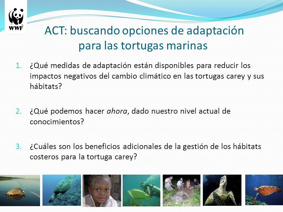 1. ¿Qué medidas de adaptación están disponibles para reducir los impactos negativos del cambio climático en las tortugas carey y sus hábitats? 2. ¿Qué