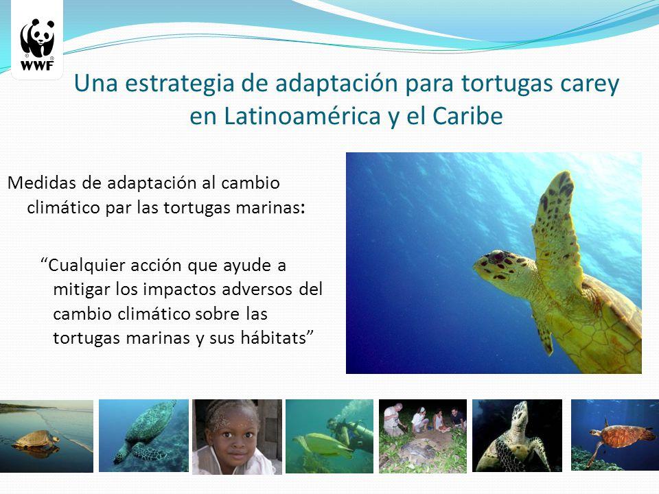 Una estrategia de adaptación para tortugas carey en Latinoamérica y el Caribe Medidas de adaptación al cambio climático par las tortugas marinas: Cualquier acción que ayude a mitigar los impactos adversos del cambio climático sobre las tortugas marinas y sus hábitats