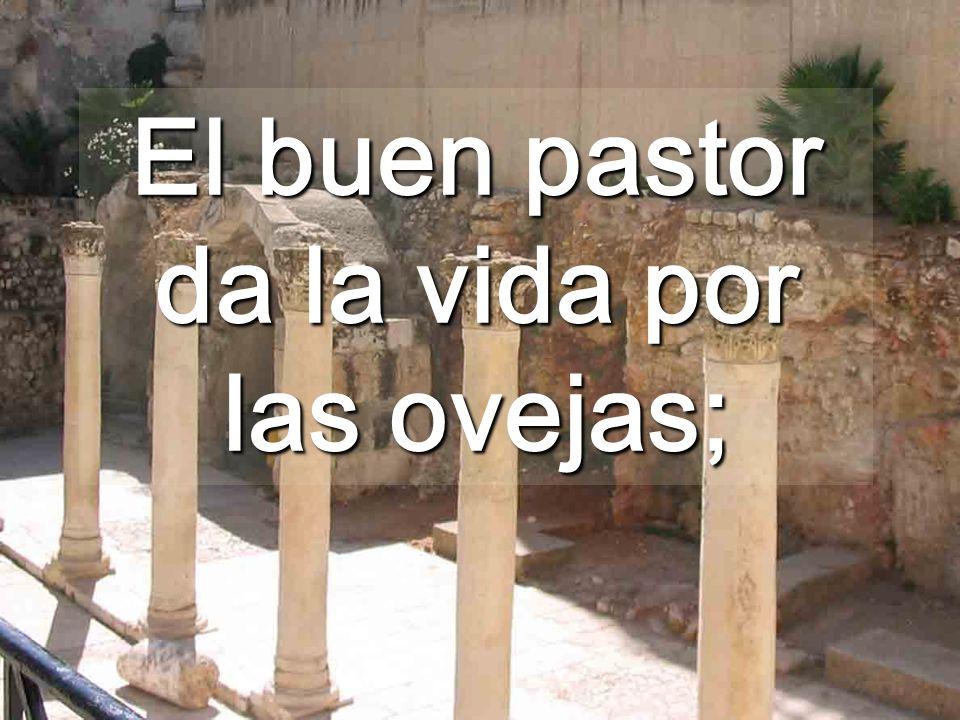 El Pastor Bueno, está al servicio de todas las ovejas, aunque sean pobres o viejas... ¿No lo entendemos que para Él TODOS somos importantes?