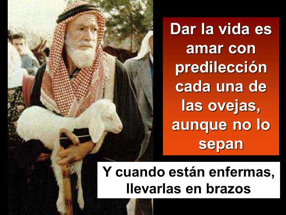 Dar la vida es amar con predilección cada una de las ovejas, aunque no lo sepan Y cuando están enfermas, llevarlas en brazos