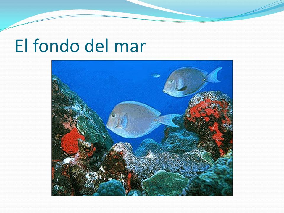 El fondo del mar
