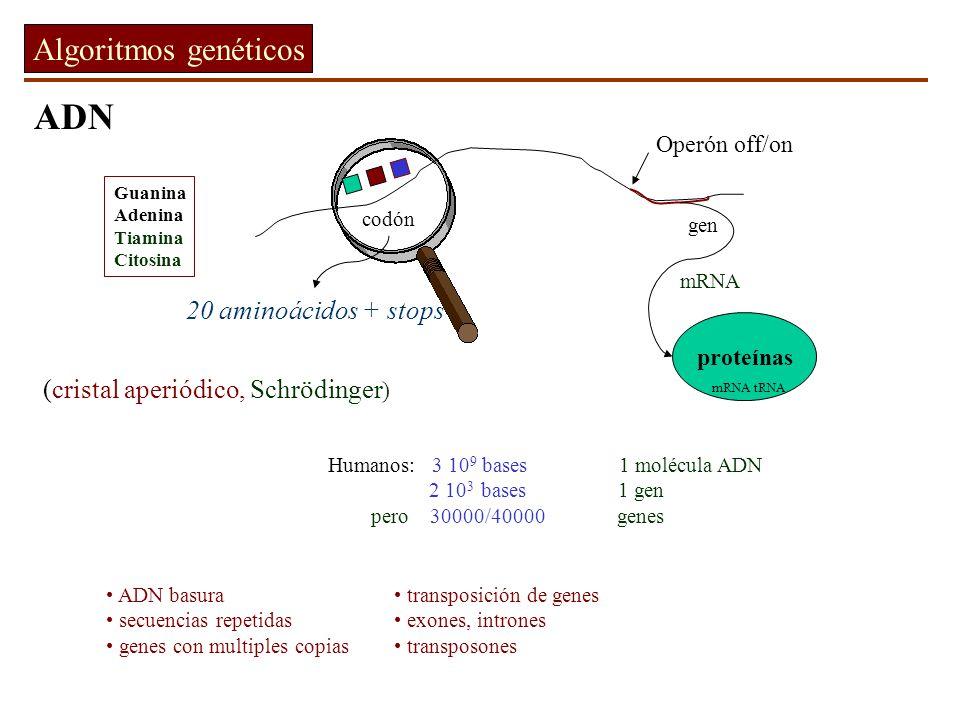 La reproduccion no preserva la forma exacta del material genético Meiosis Recombinación de material genético crossover Mutaciones Mecanismos de corrección protegen parcialmente la fidelidad de la copia del ADN copiado 1 error / 10000 bases - correcciones = 1 error / 10 9 bases + Selección Natural Surpervivencia del mejor adaptado antes de la reproducción Crossover aleatorio y mutaciones filtrados por selección natural a lo largo de muchas generaciones lleva a especies mejor adaptadas.