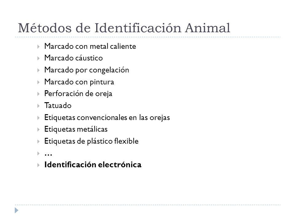 Métodos de Identificación Animal Marcado con metal caliente Marcado cáustico Marcado por congelación Marcado con pintura Perforación de oreja Tatuado