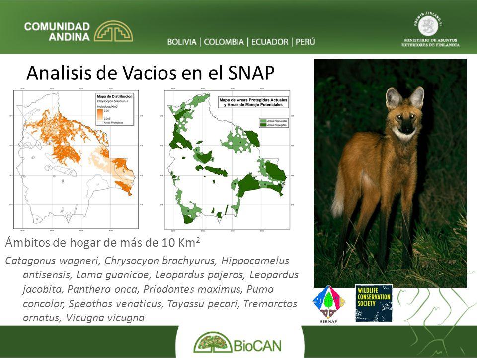 Analisis de Vacios en el SNAP Ámbitos de hogar de más de 10 Km 2 Catagonus wagneri, Chrysocyon brachyurus, Hippocamelus antisensis, Lama guanicoe, Leo