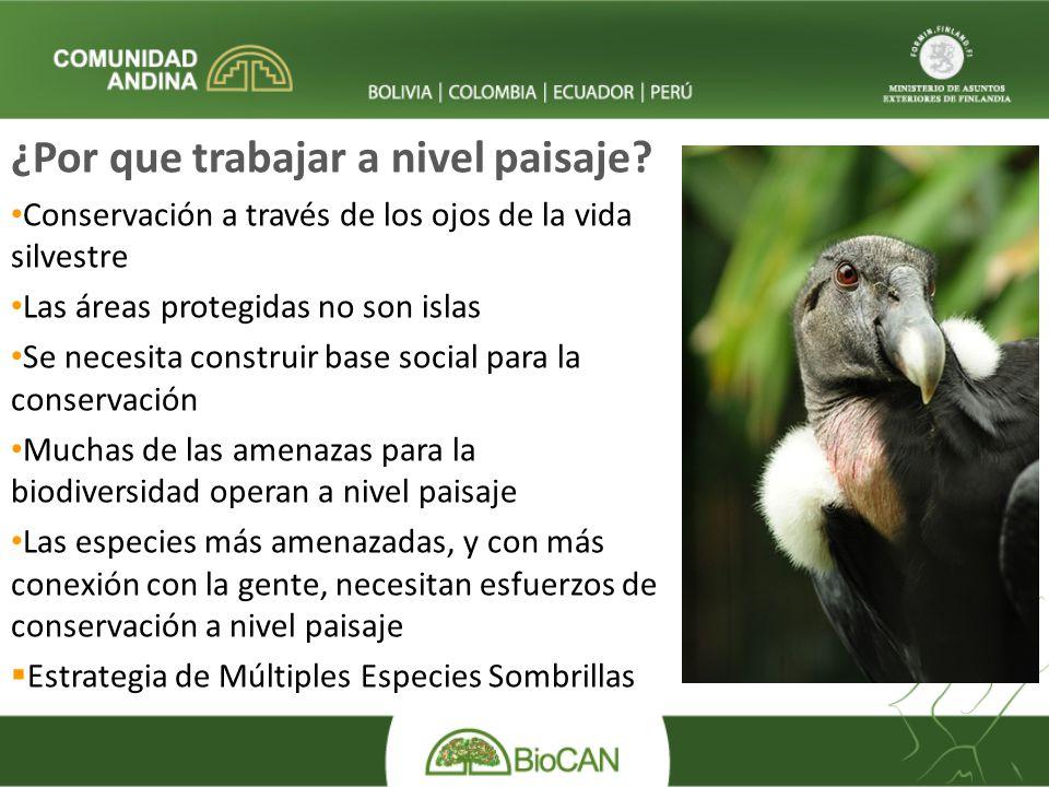 ¿Por que trabajar a nivel paisaje? Conservación a través de los ojos de la vida silvestre Las áreas protegidas no son islas Se necesita construir base