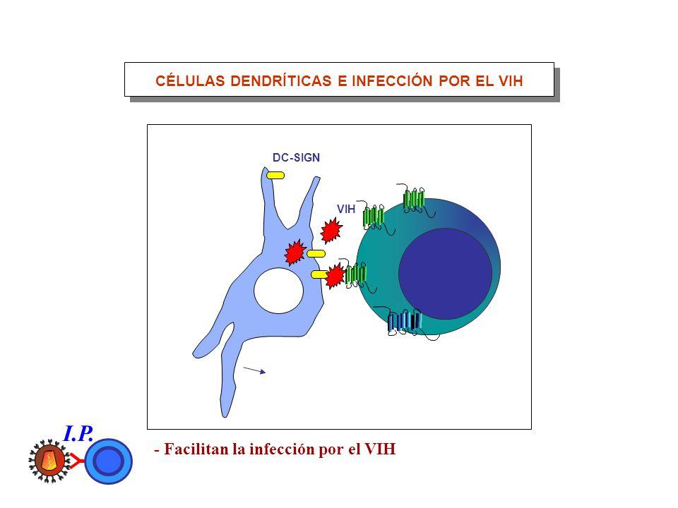 DC-SIGN VIH CÉLULAS DENDRÍTICAS E INFECCIÓN POR EL VIH - Facilitan la infección por el VIH I.P.
