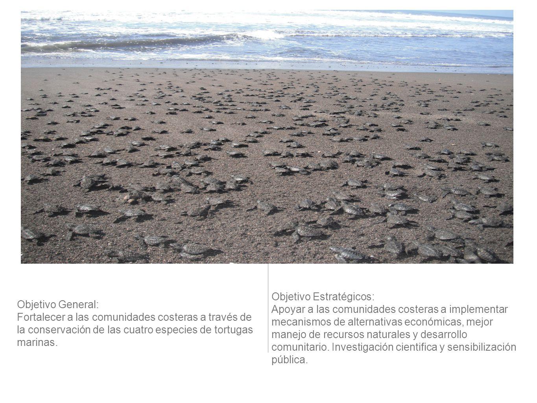 Objetivo General: Fortalecer a las comunidades costeras a través de la conservación de las cuatro especies de tortugas marinas. Objetivo Estratégicos: