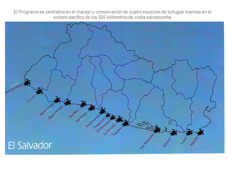 El Programa se centraliza en el manejo y conservación de cuatro especies de tortugas marinas en el océano pacifico de los 325 kilómetros de costa salv