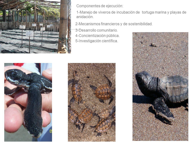 Componentes de ejecución: 1-Manejo de viveros de incubación de tortuga marina y playas de anidación. 2-Mecanismos financieros y de sostenibilidad. 3-D