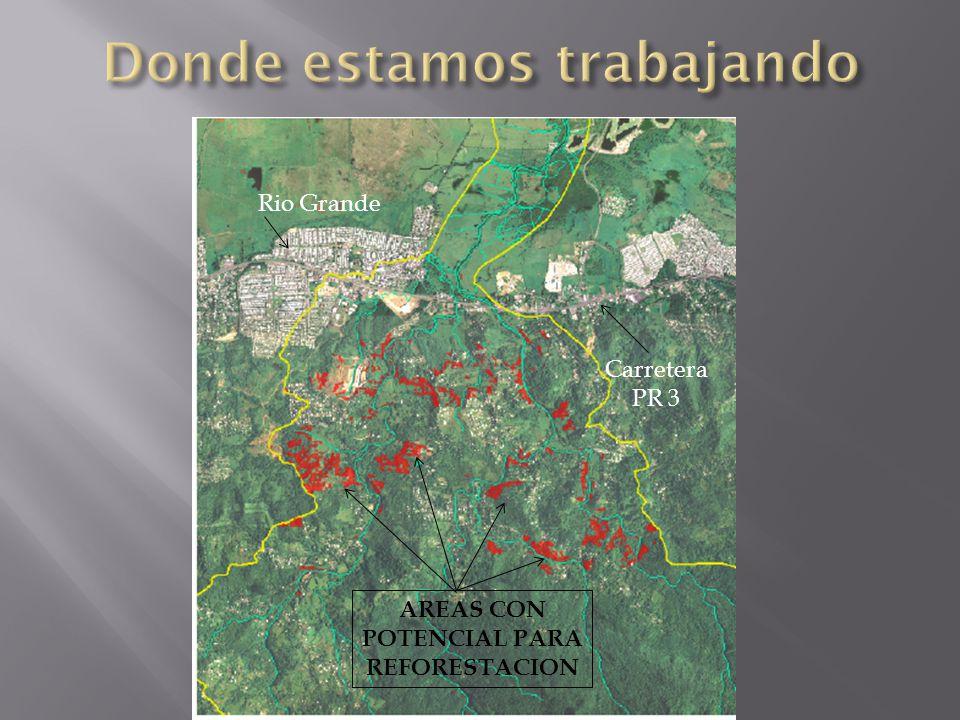 Rio Grande Carretera PR 3 AREAS CON POTENCIAL PARA REFORESTACION