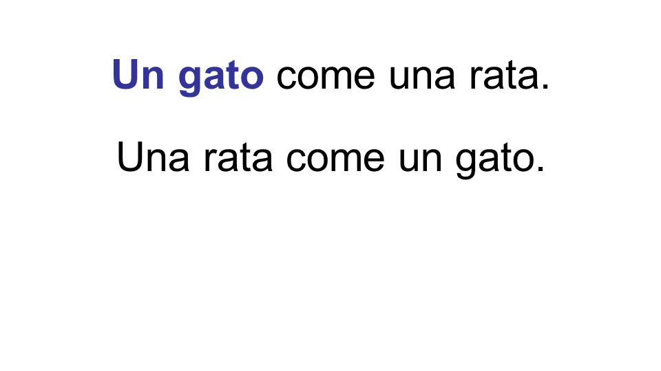 Una rata come un gato.