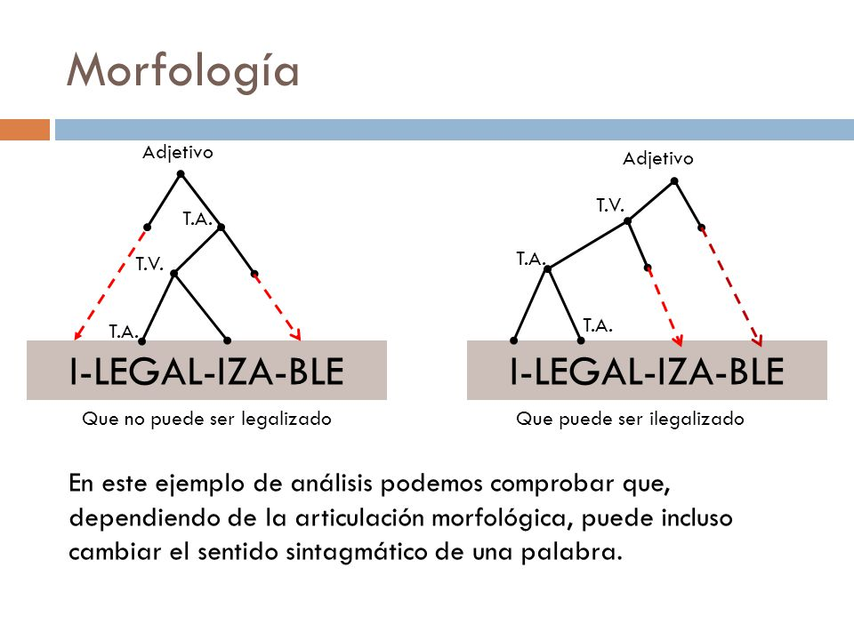 Morfología Análisis: El tema es la raíz a la que se adjunta un afijo, pero puede tener una estructura más compleja, en la palabra ILEGALIZABLE el afij