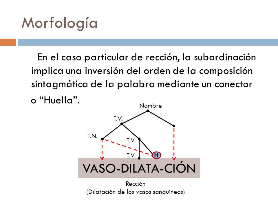 Morfología En el caso particular de rección, la subordinación implica una inversión del orden de la composición sintagmática de la palabra mediante un conector o Huella.